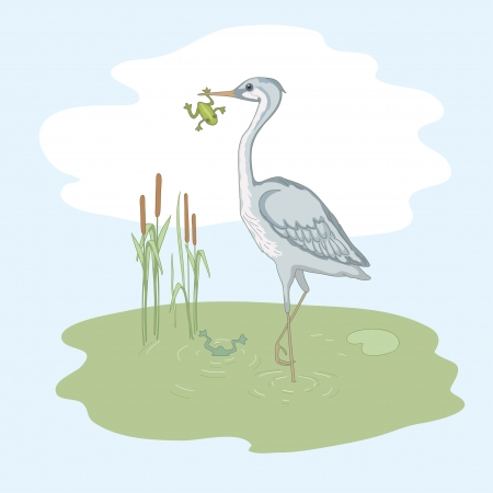 Gray heron and frog on the green morass