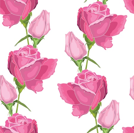 Pink roses on the white  background Vector