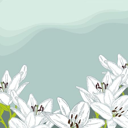 tierno: Tender lirio blanco en el fondo azul Vectores