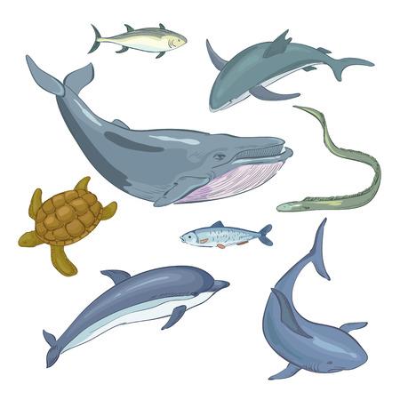 ballena azul: Mundo submarino y sus habitantes Vectores