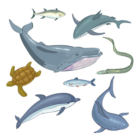 whale underwater: Underwater world and its inhabitant Illustration
