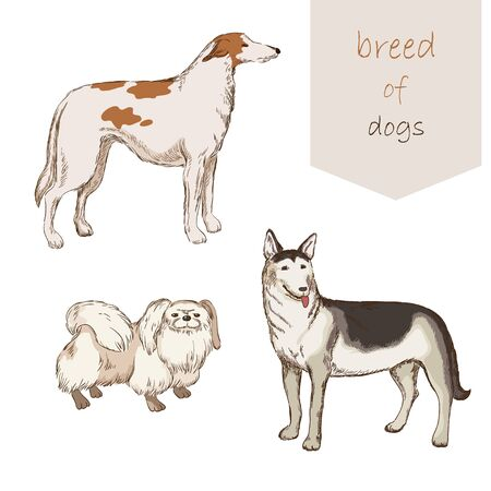 lapdog: Different breeds of dogs