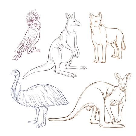 dingo: Wild animals