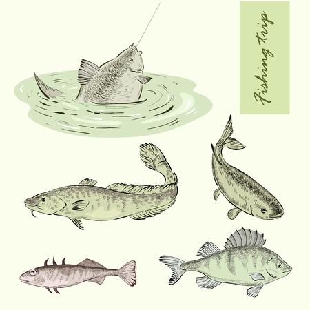 lota: Viaje de pesca y pescado de r�o