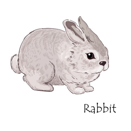 whelps: Little hare