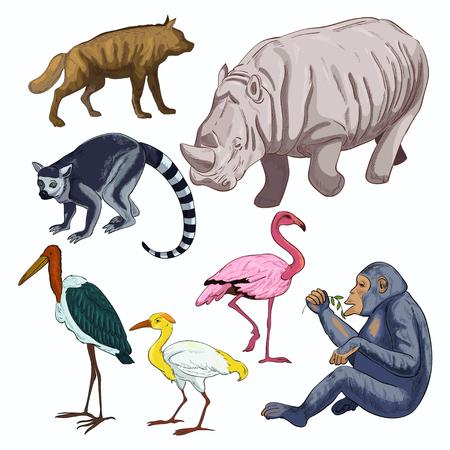 African wild animals Vector