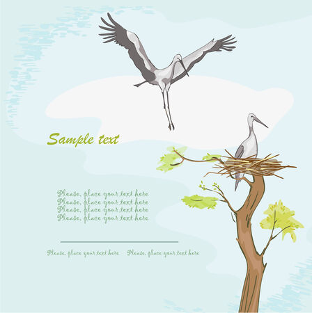 Storks and nest Illustration