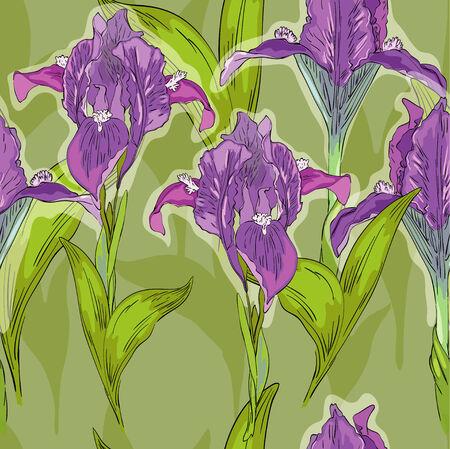 Summer pattern with iris Illustration