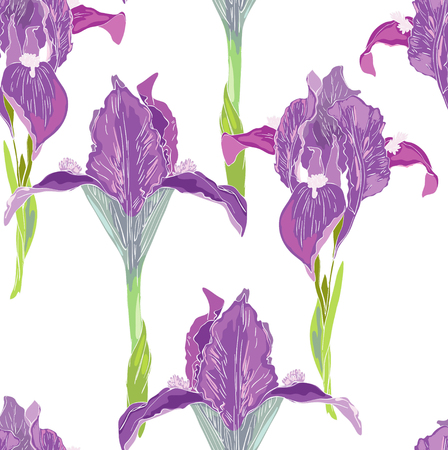 Violet iris on white background Vector