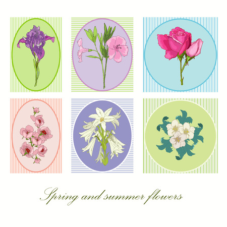 Spring and summer flowers in frame Vector