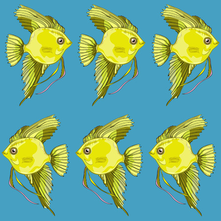 Gold fish on blue background