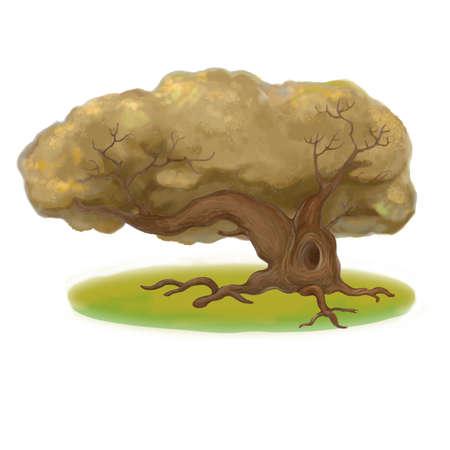 grassplot: Old  oak on grass-plot