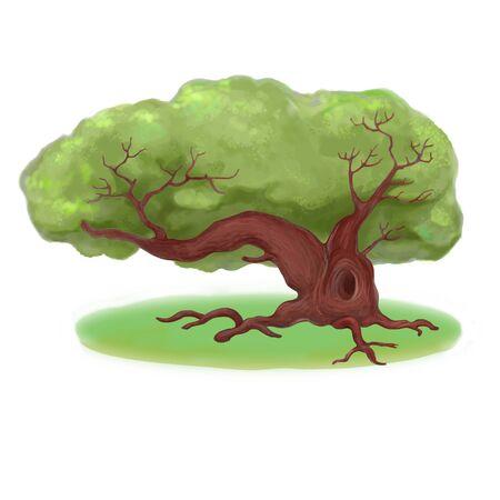 bole: Summer old oak Stock Photo