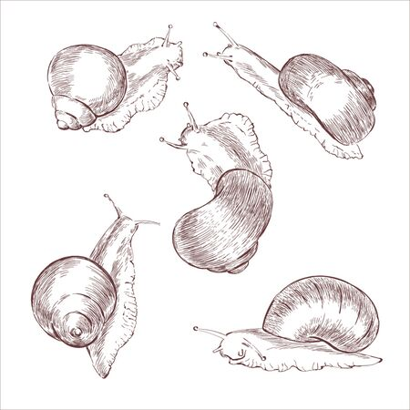 Drawing of snails
