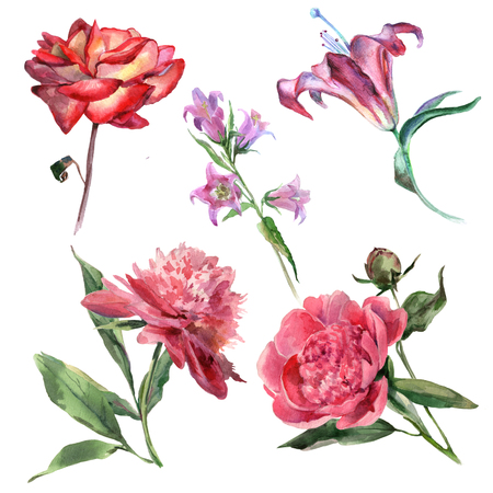 Collection of summer bright flowers by watercolor Stock Photo