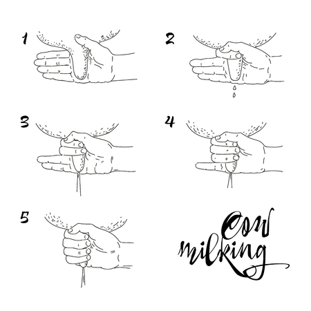 Scheme of cow milking, handwork Illustration