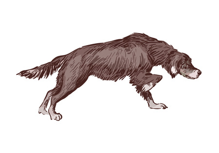 The dog follows the trail, drawing on white background Ilustrace