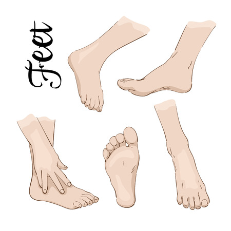 Color drawing of feet, scheme, anatomy, vector Illustration