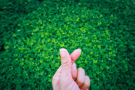 Mini heart, the symbol of love expression of the new generation. By using the fingertips to cross each other into a small heart On a green plant background. green heart consciously conserves nature. Stockfoto