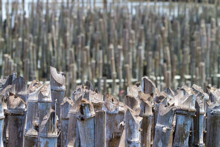 Breakwater, dry bamboo that was inserted into the muddy seashore To prevent the disappearance of the land, used to create waves. Prevent plastic waste flowing into the sea. The disappearance of the mangrove forest And coastal erosion. Banco de Imagens