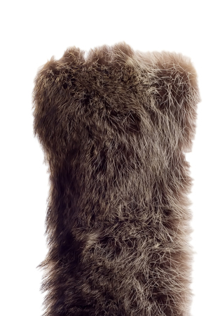 silver fox: Fur texture, isolated on a white