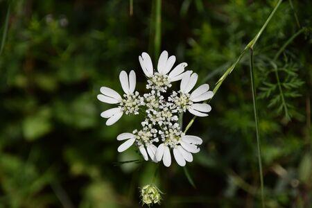 Close-up van witte bloem