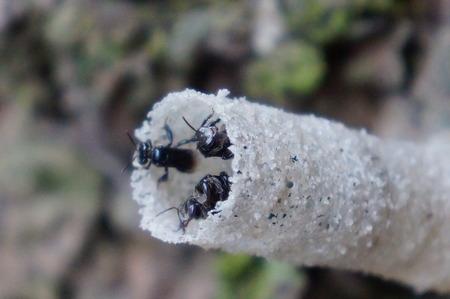 Kleine bijen die in een burrow in het tropische bos nestelen Stockfoto