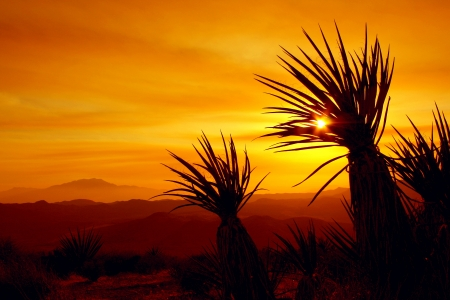 mojave desert: Sunset in Joshua Tree National Park, California Stock Photo