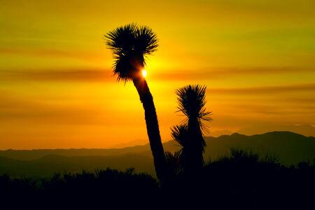 Sunset in Joshua Tree National Park, California photo