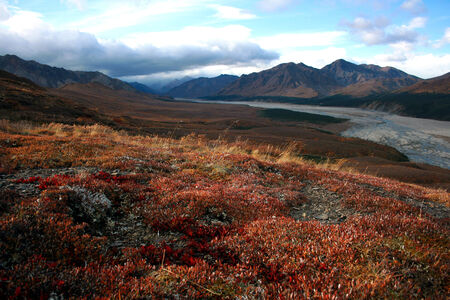 denali: Autumn landscape, Denali National Park, Alaska, USA