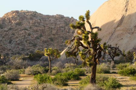 Mojave Desert landscape, Joshua Tree National Park, near Palm Springs, California, USA Stock Photo