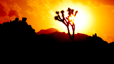 Sunset and silhouette of joshua tree, Joshua Tree National Park, California, USA Stock Photo