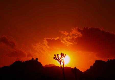 Sunset and silhouette of joshua tree, Joshua Tree National Park, California, USA Stock Photo
