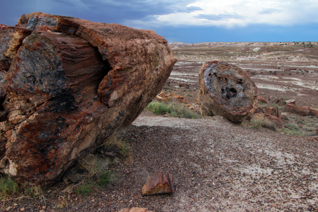 Petrified wood in Petrified Forest National Park, near Holbrook, Arizona, USA 写真素材