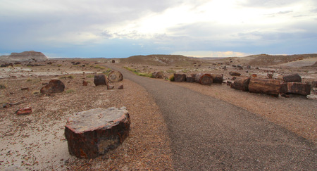 Crystal Forest Trail and petrified wood logs in Petrified Forest National Park, Arizona, United States of America (USA)