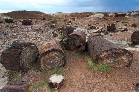 Petrified wood logs, Petrified Forest National Park near Holbrook and Flagstaff, Arizona, United States of America (USA)