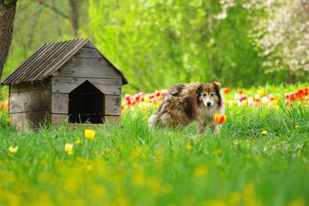 casa de perro: Casa de perro  Foto de archivo