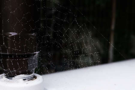 spider net: web spider net with rain drops Stock Photo