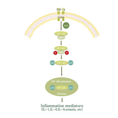 inflammation pathway