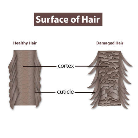 surface of hair