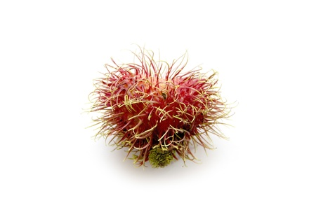 flesh: rambutan heart shape