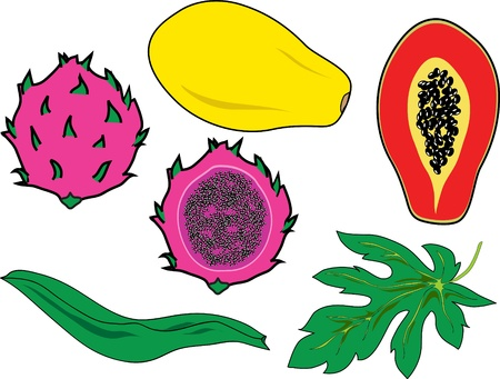 thai dessert: pitaya and papaya Illustration