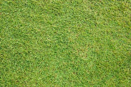 Beautiful green grass background Stock Photo
