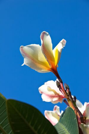 Beautiful pink yellow white flowers and Blue sky photo