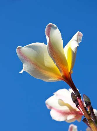 Beautiful pink yellow flower blue sky background