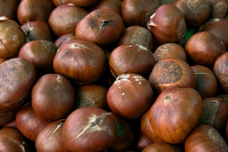 Close up chestnut