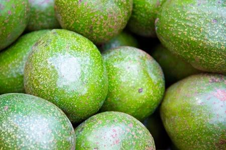 Avocado peterson variety Stock Photo