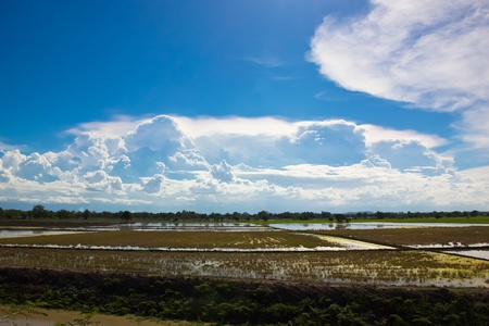 Blue sky and rice field Stock Photo