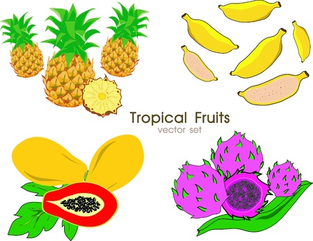 Vector tropical fruits collection