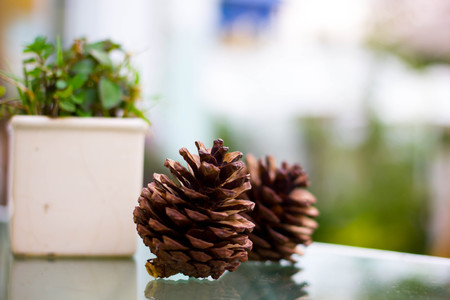 Close up pine nut on mirror table with vase small green Stock Photo